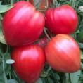 Légumes et fruits au potager 2020