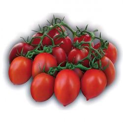 Tomates DORA