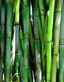 Graminées & Bambous