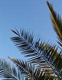 Palmiers et méditerranéennes