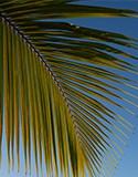 Palmiers et autres