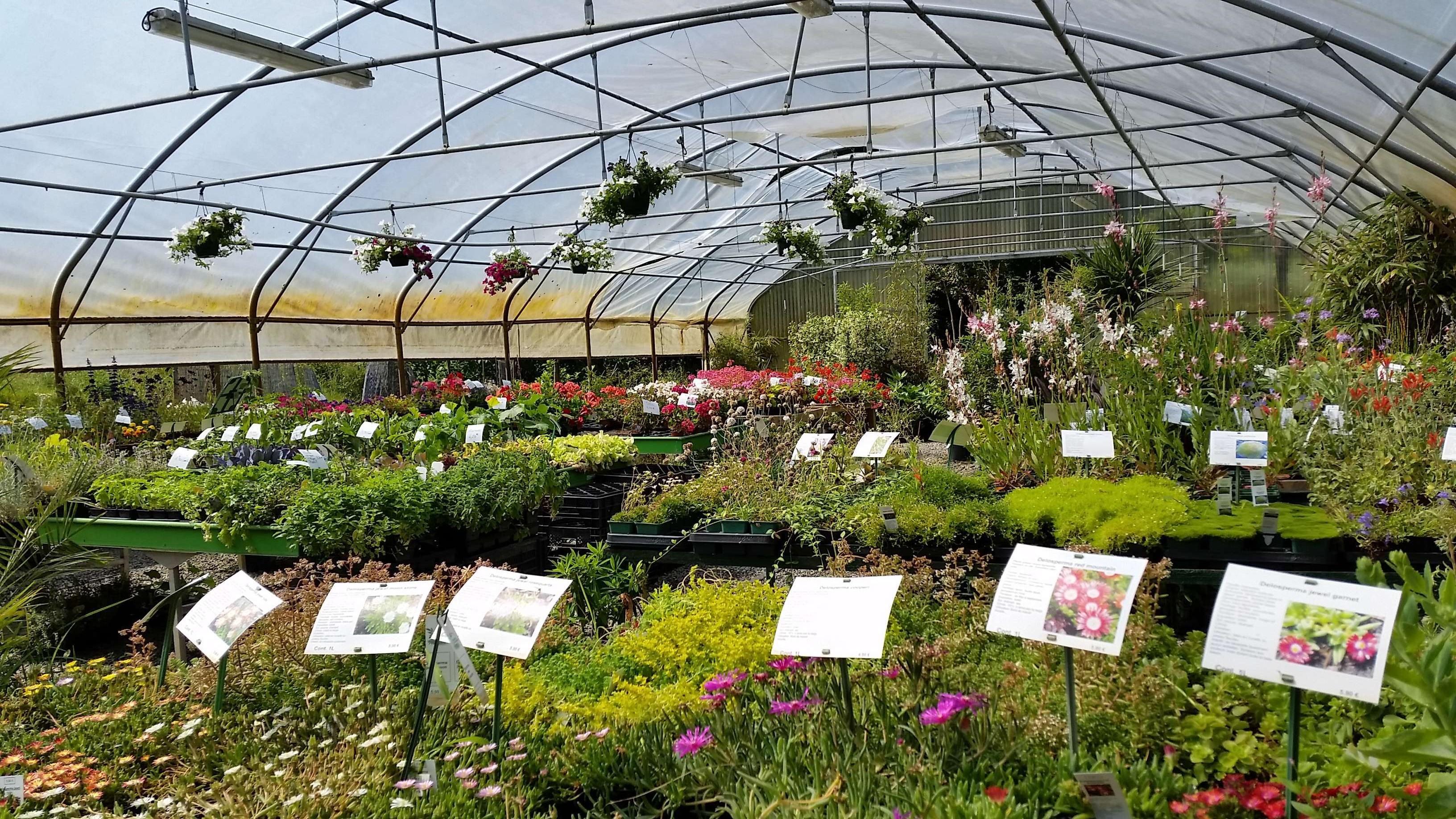 La Maison du Bananier - Vivaces fleuries