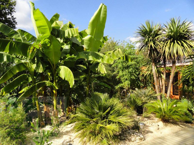Paysagisme et cr ation de jardins p pini re ecologique la maison du bananier - La maison du bananier ...