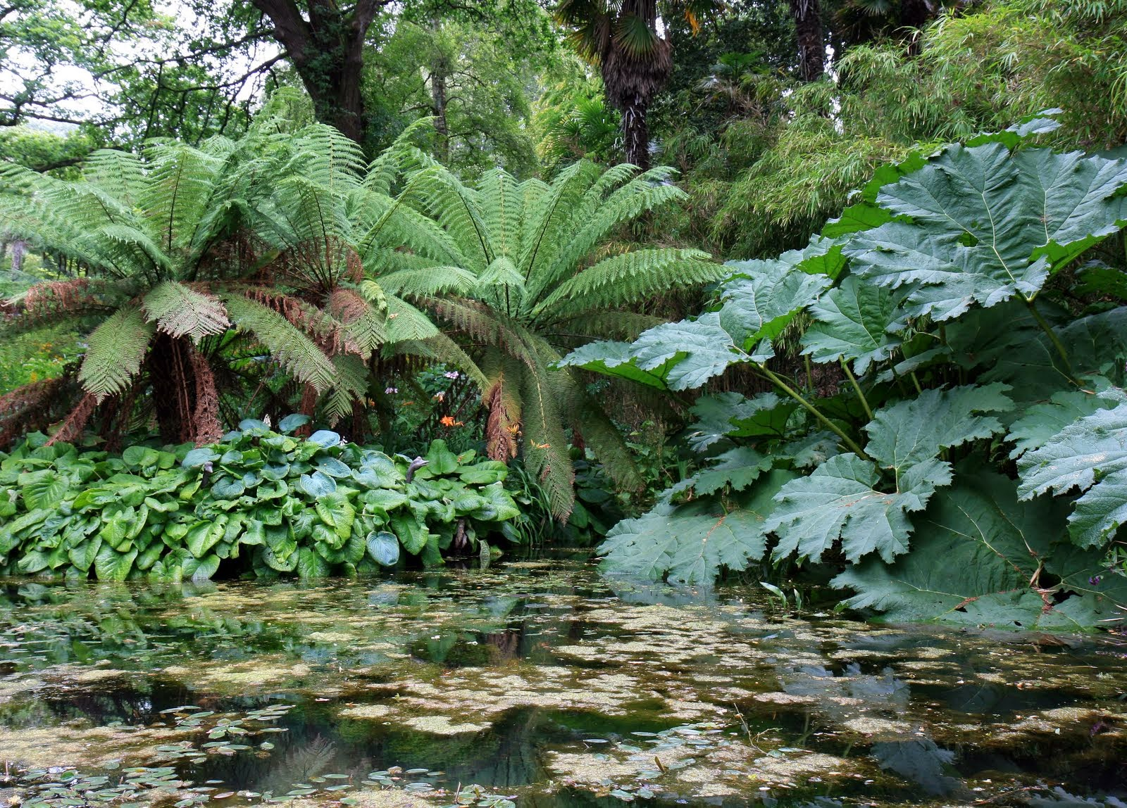 Jardin aux feuilles plantes