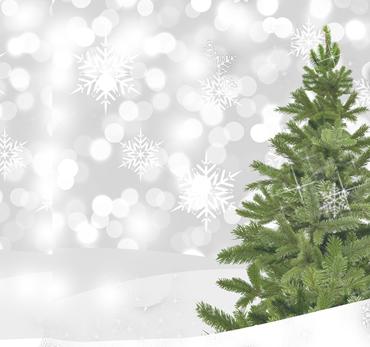 Réservez votre sapin de Noël !
